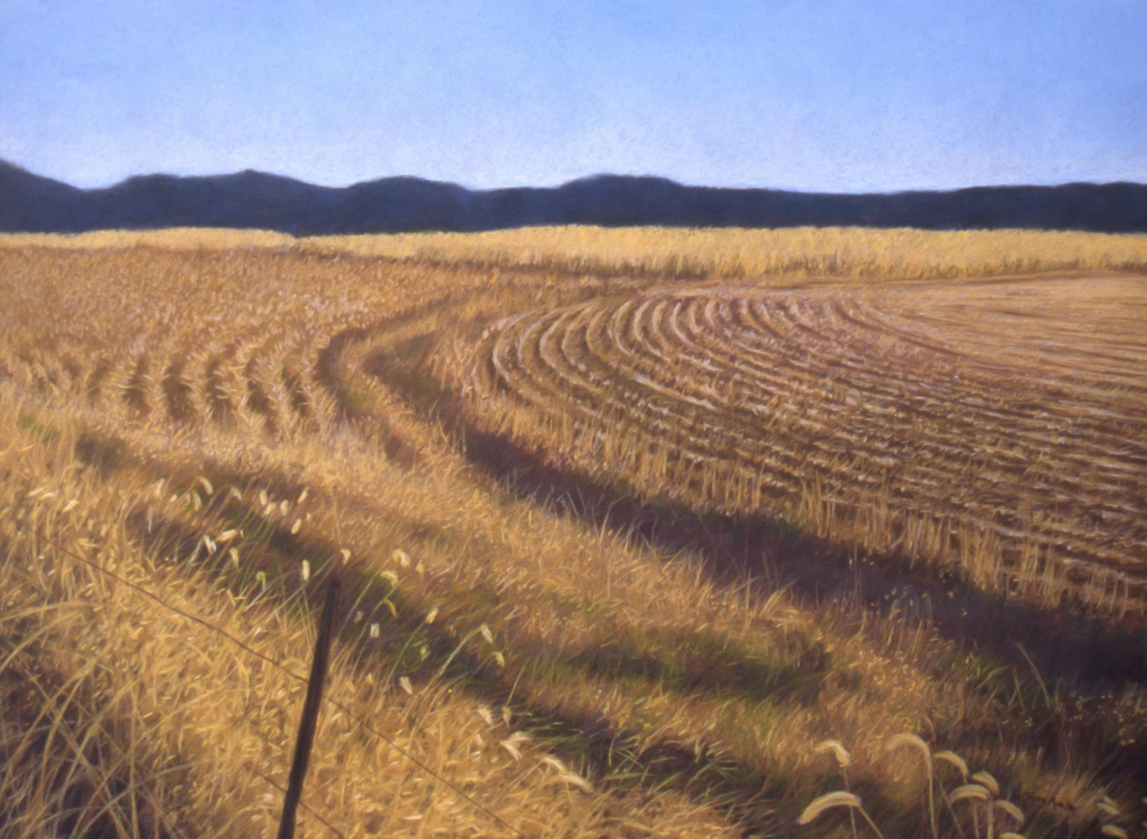 """Rhythms in the Meadow""    22"" X 30""   pastel on paper"