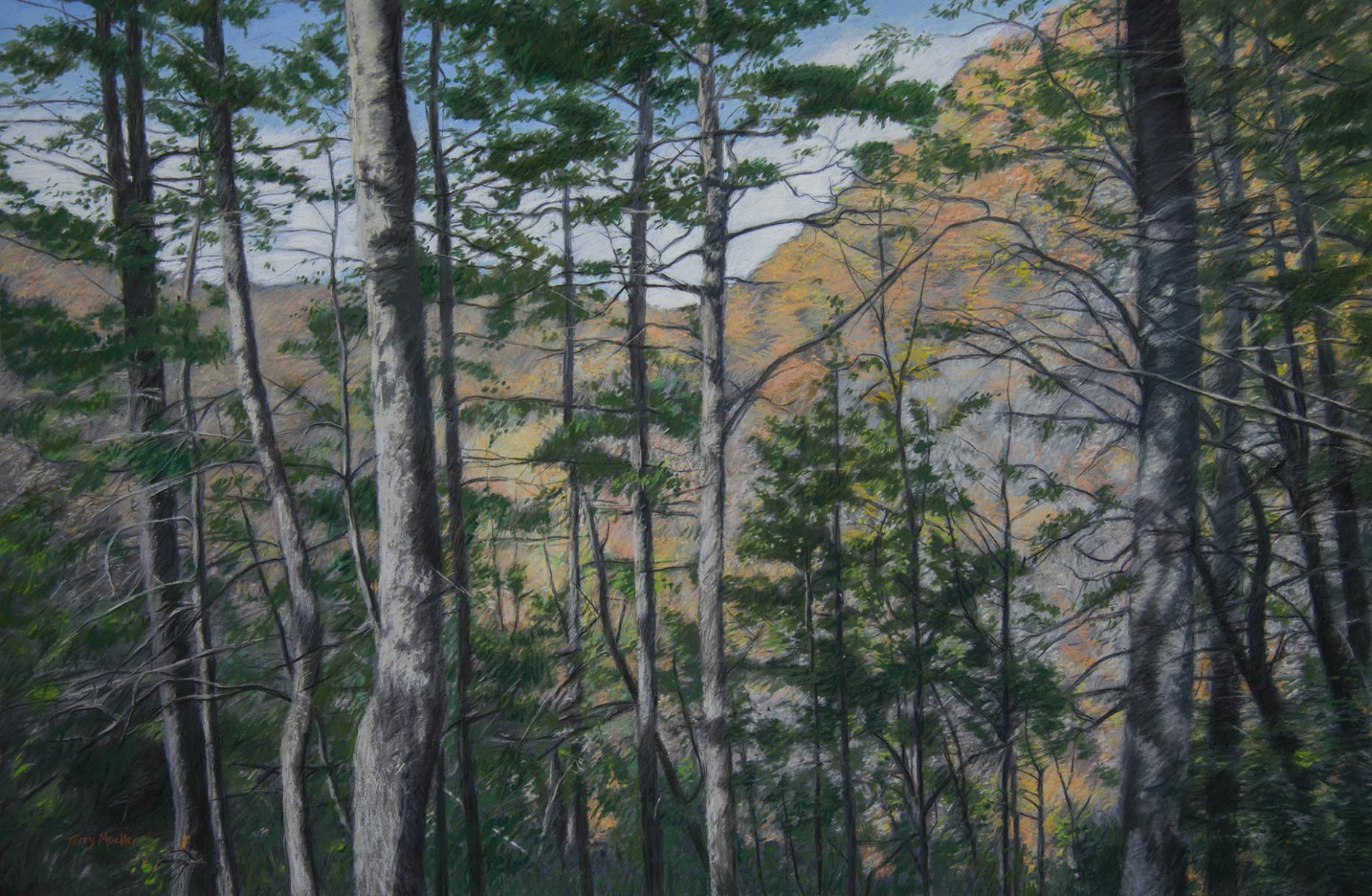 """The Woodlands""  24"" X 36""  pastel on panel"